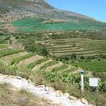 Ealges Nest Vineyards