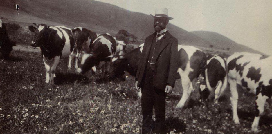 Sir David Graaff, first Baronet, with his beloved cattle