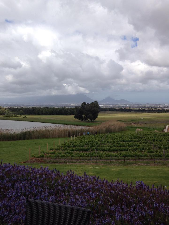 The view across the vineyards to Table Mountain