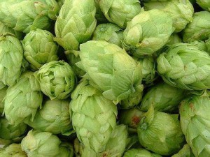 Hops - add the delicious flavours & bitterness to beer