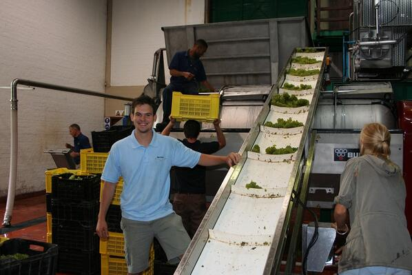 Matthew Day pressing Chardonnay
