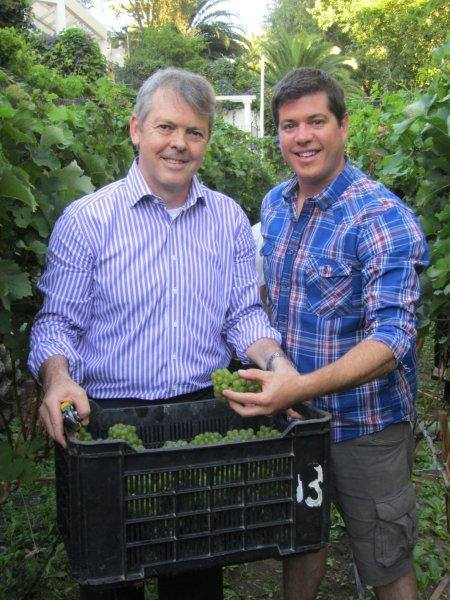 The Vineyard Hotel GM Roy Davies & David Wibberly, their wine specialist harvesting in the hotel's Vineyard
