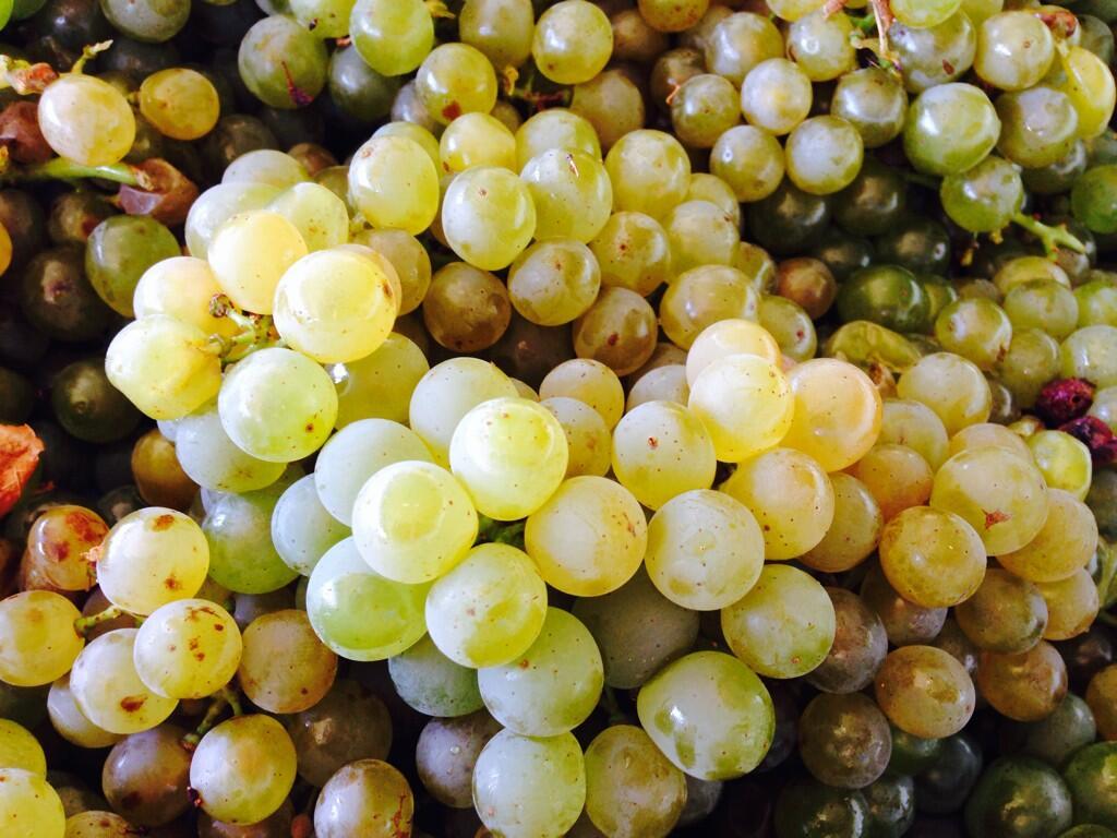 The merwida family vintners chenin blanc 2016 an honour for Chenin blanc