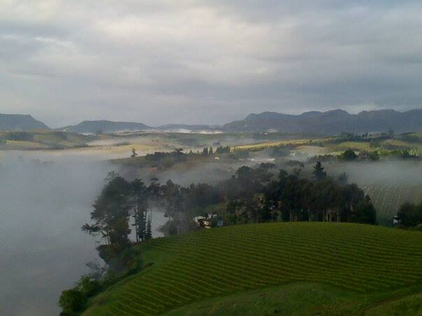 Cool mist over Corder Family Vineyard Cool Climate Vineyards in Elgin