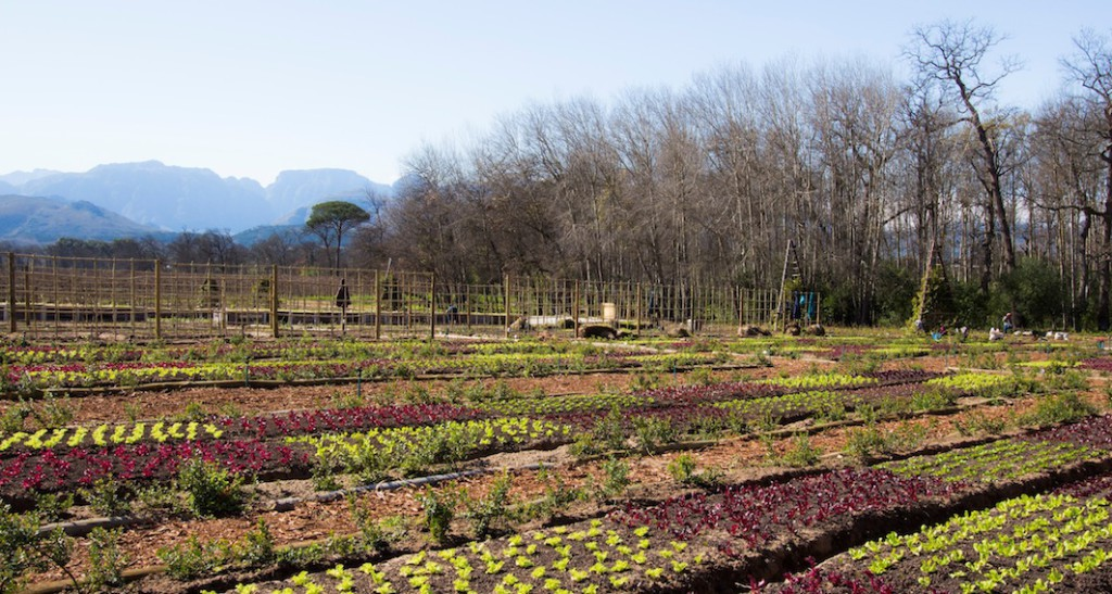 The-Boschendal-Werf-Food-Garden-1024x547