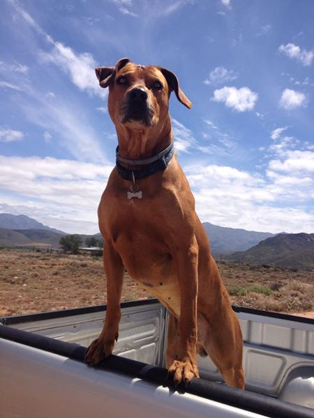 Tawny on the Bakkie