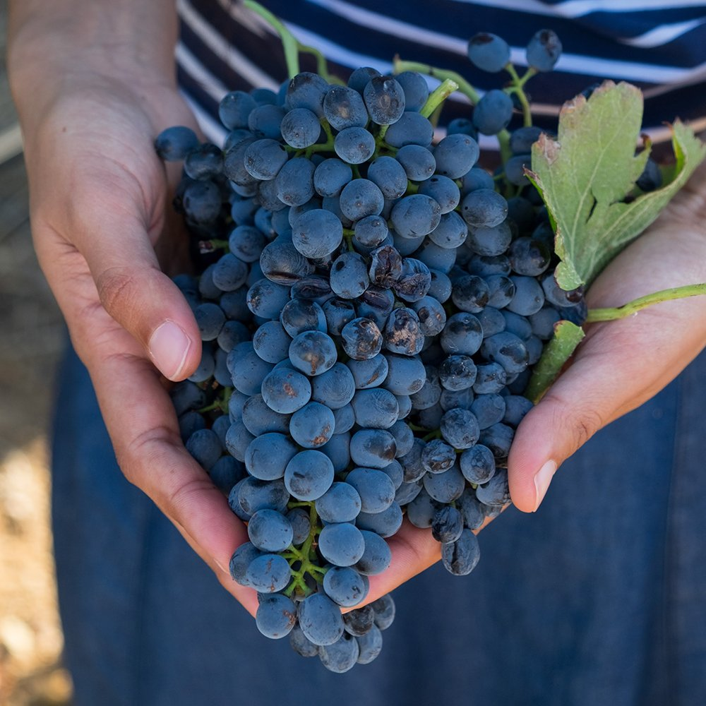 pinotage-a-handful