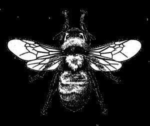beesgraphicimageviaknickoftimeinteriors