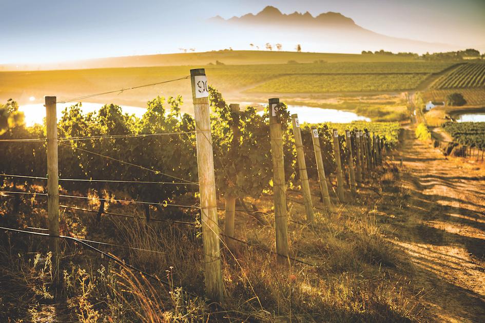 Mulderbosch Vineyards In The Stellenbosch Wine Appellation